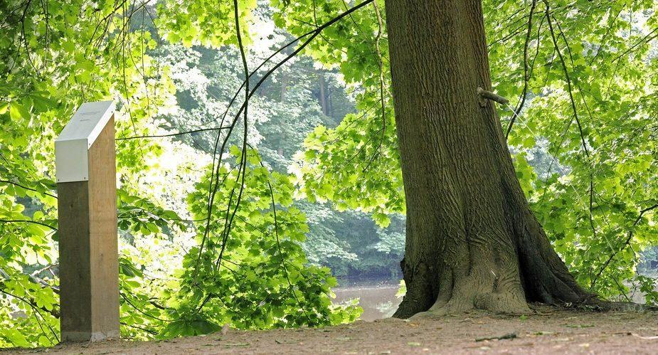 Pinkelbaum GrünGürtel