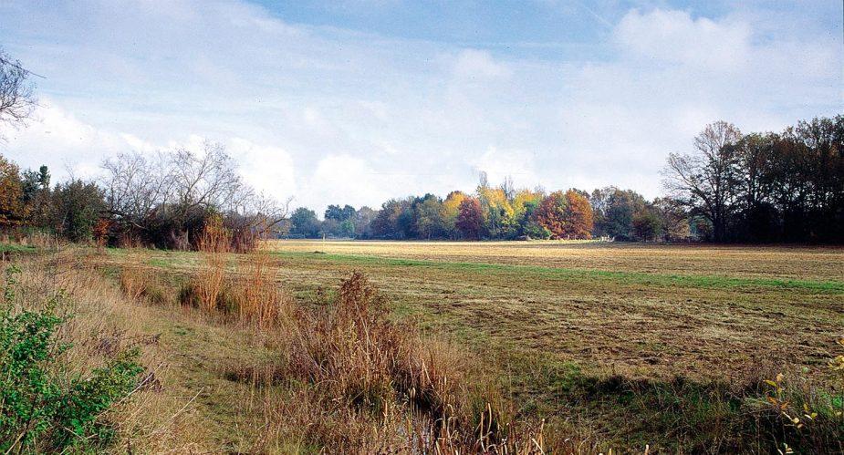 baierhansenwiese