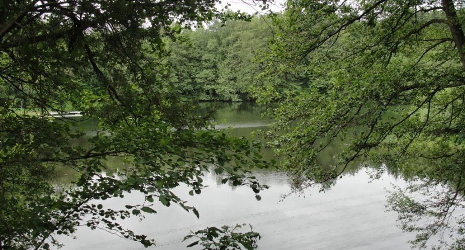 grüner ring hanau