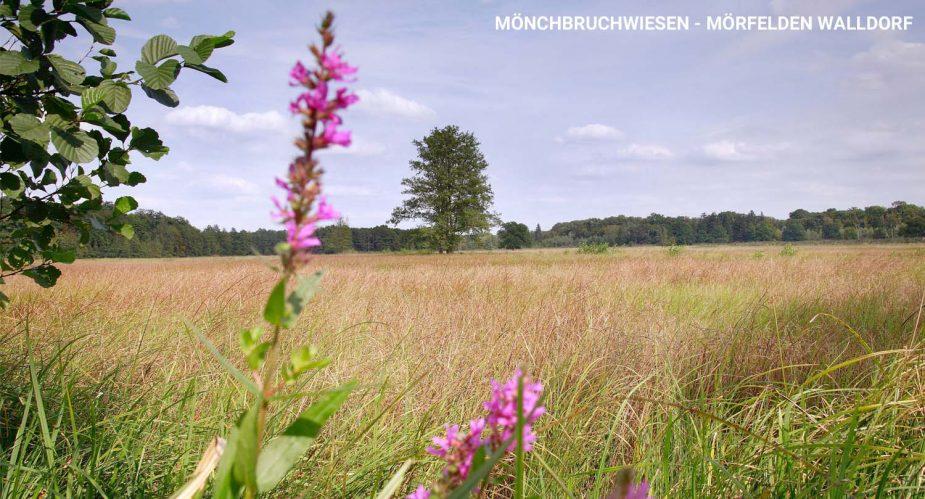 mönchbruchwiesen2