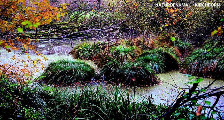 naturdenkmal-kirchborn