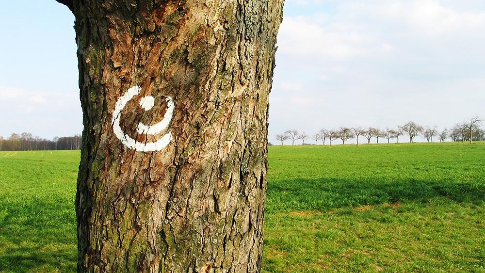 Baumstamm mit GrünGürtel Logo