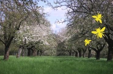 bienen-blüte-gelb