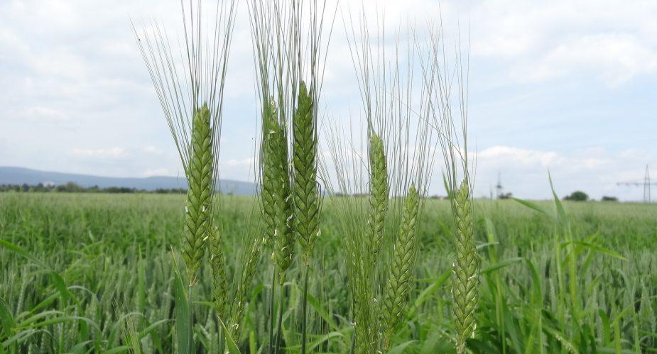agrar-kultur-achse (6)